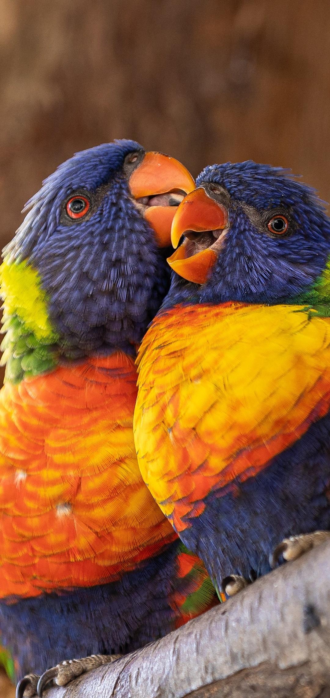 close-up-perched-birds-4k-0l.jpg