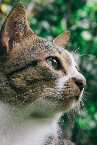 close-up-photo-of-gray-and-white-tabby-cat-ck.jpg