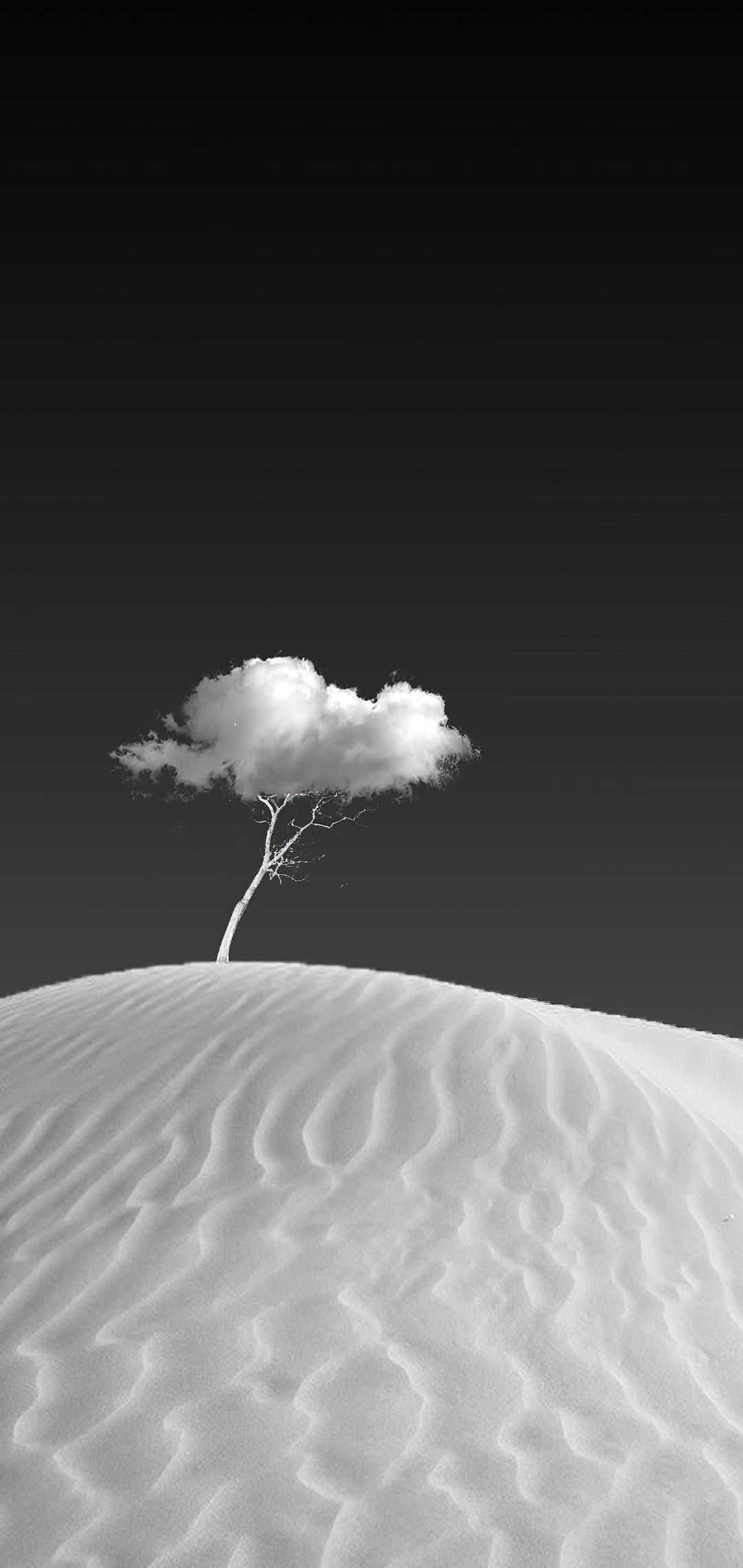 cloud-on-tree-vp.jpg