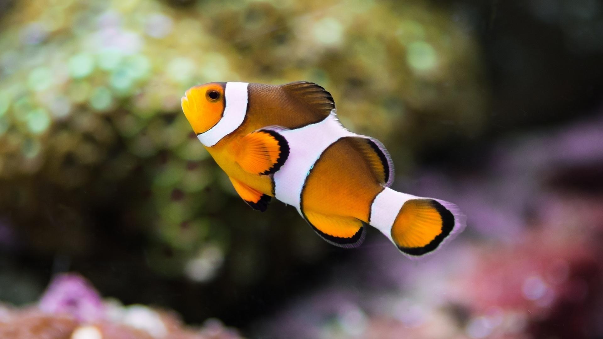 Желтая Рыба макро  № 1088098 без смс