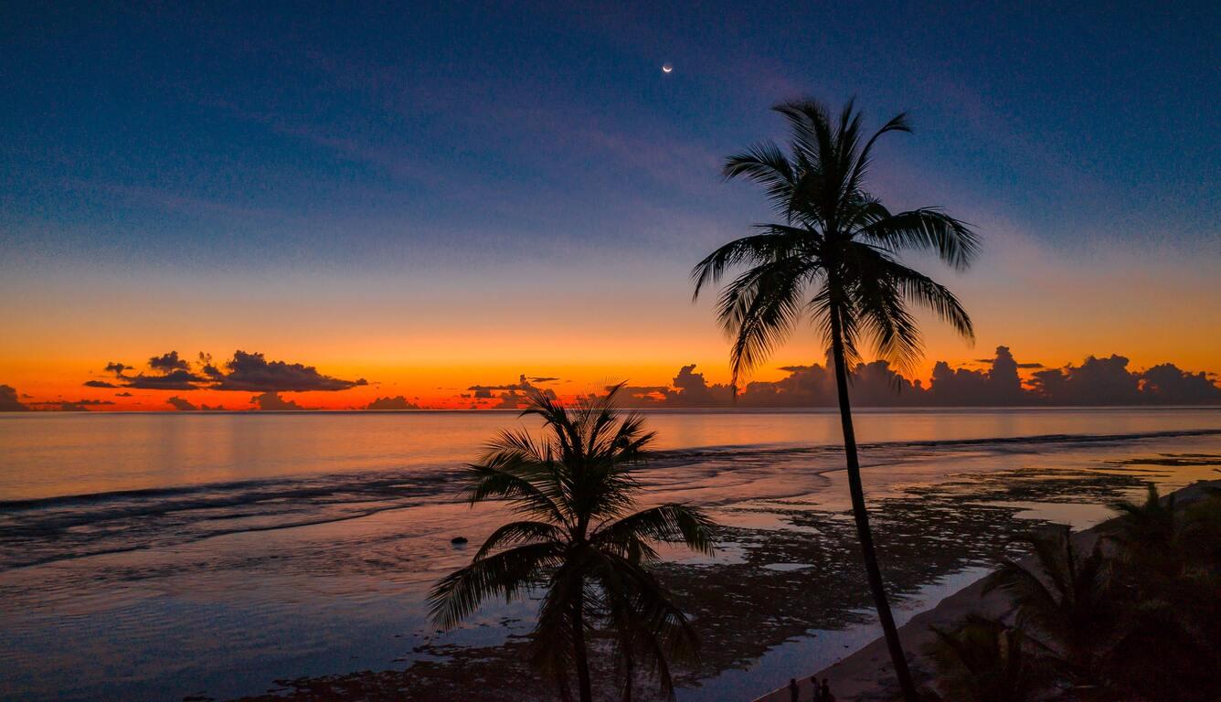 coconut-trees-4k-i0.jpg