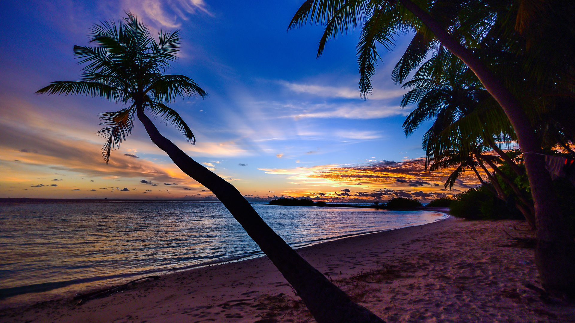 coconut-trees-beach-clouds-w7.jpg