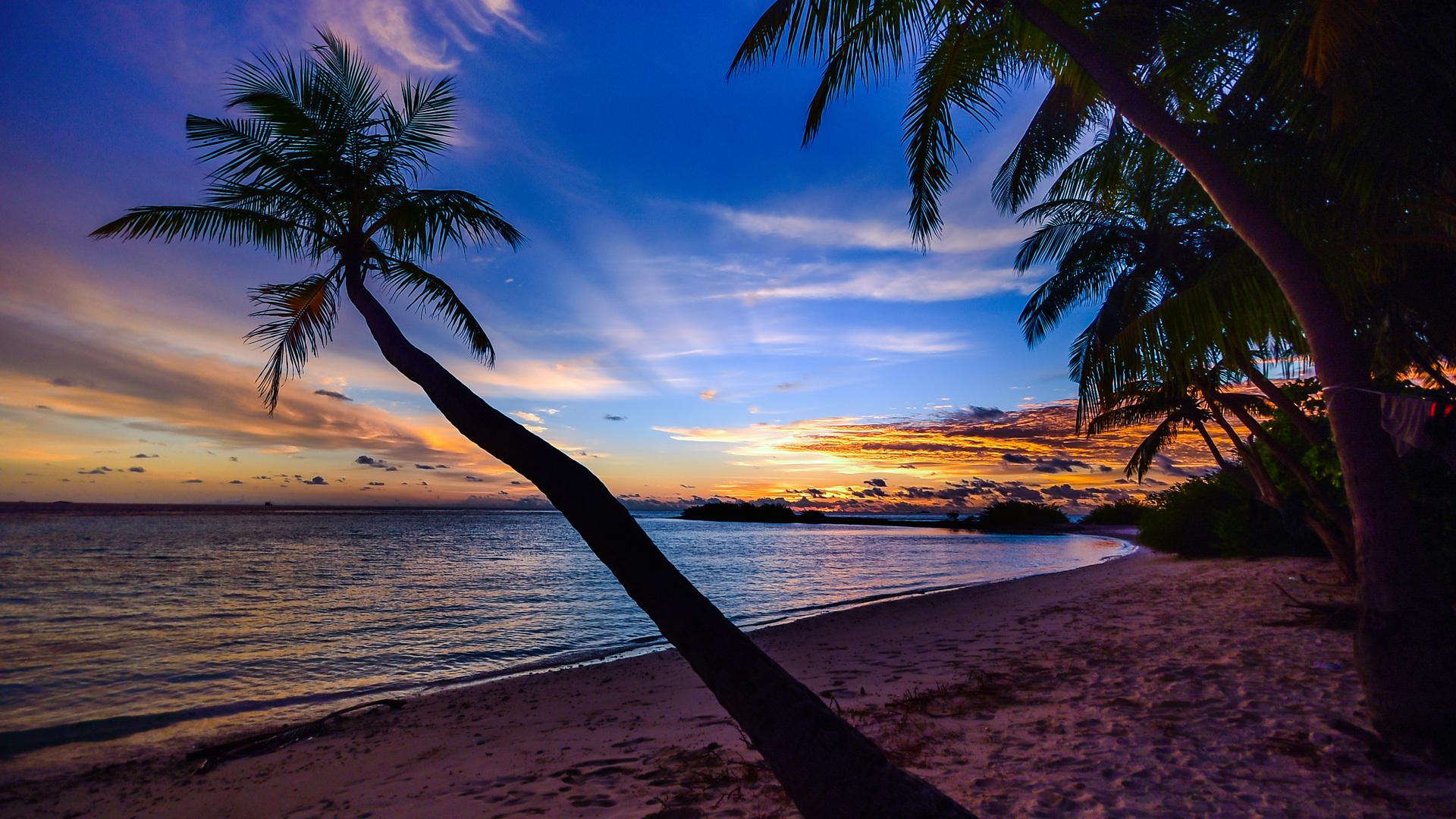 Coconut Trees Beach Clouds W7