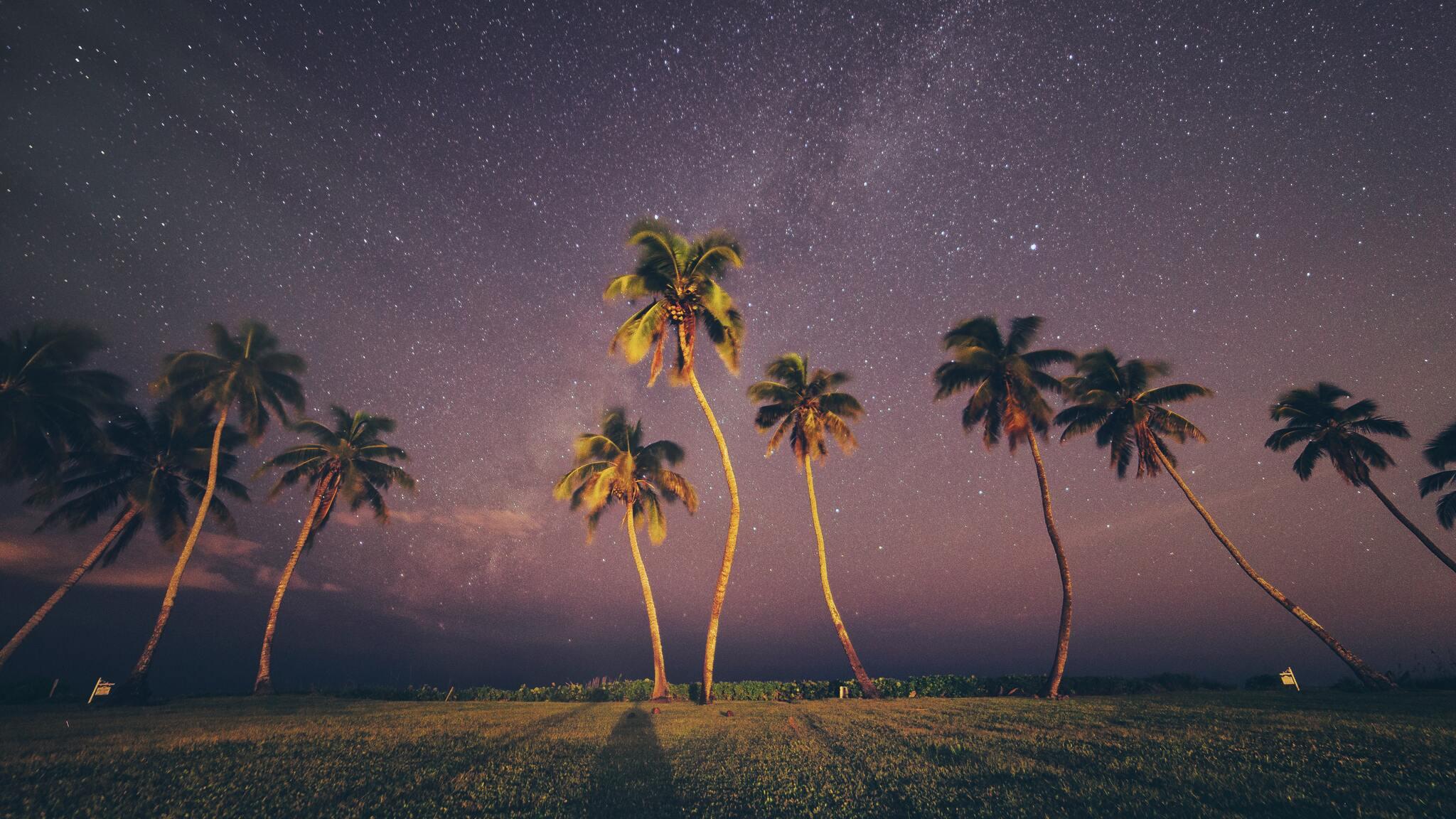 coconut-trees-under-starry-sky-6n.jpg