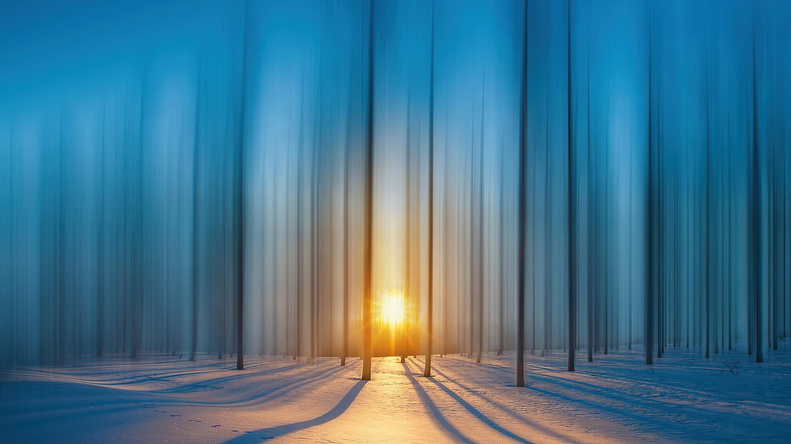 cold-snow-trees-4k-bg.jpg