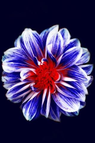 colorful-flower-art-fg.jpg