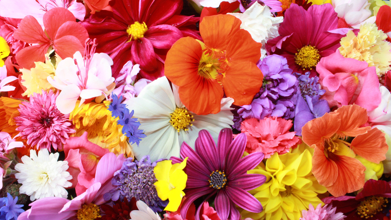 1366x768 Colorful HD Flowers Resolution 4k Wallpapers