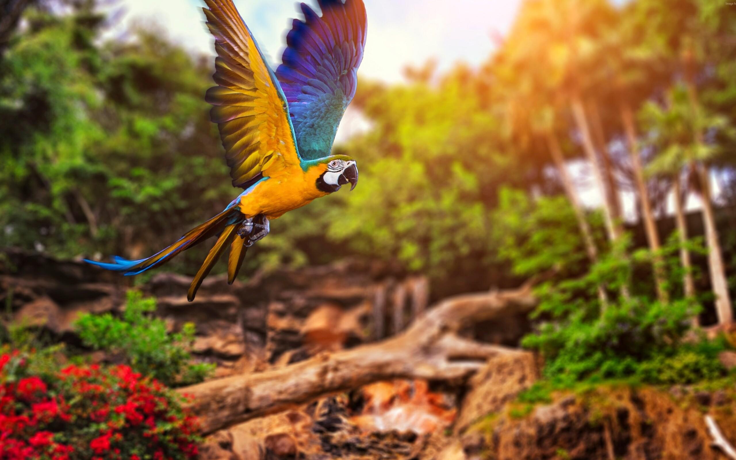природа животные птицы попугаи  № 103514 бесплатно