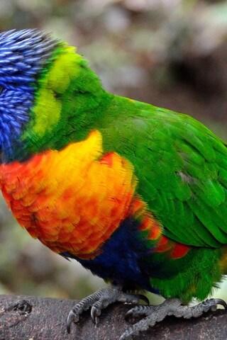 colorful-parrot-bird.jpg