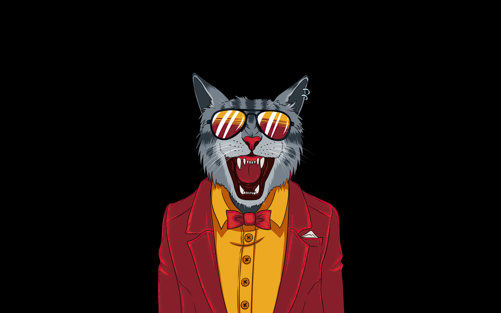 1680x1050 Cool Cat Minimal 4k 1680x1050 Resolution Hd 4k Wallpapers Images Backgrounds Photos And Pictures