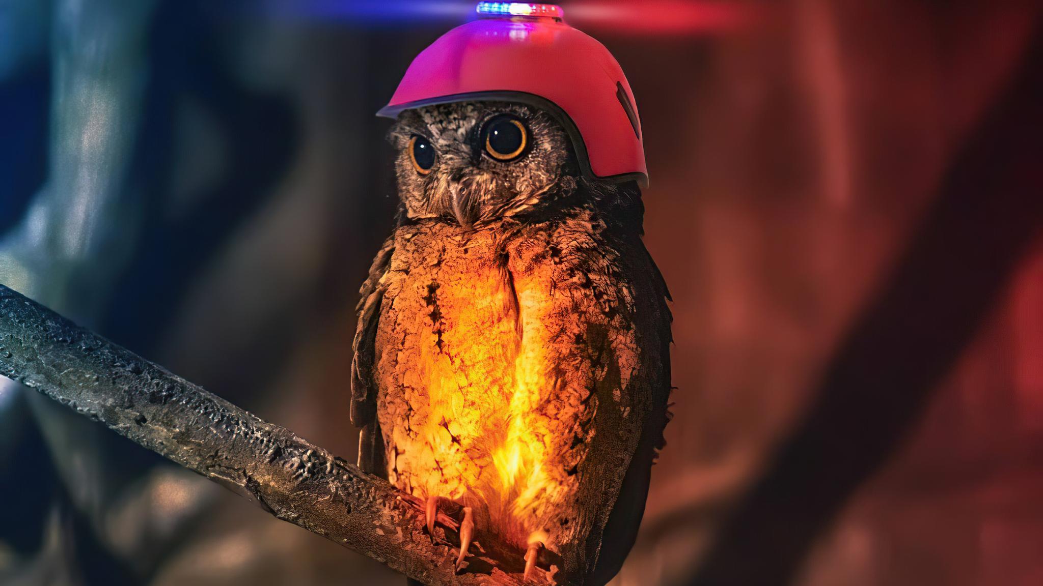 cop-owl-4k-t7.jpg
