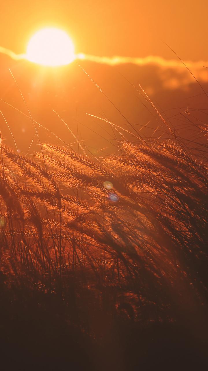 corn-filed-sunset-5k-bn.jpg