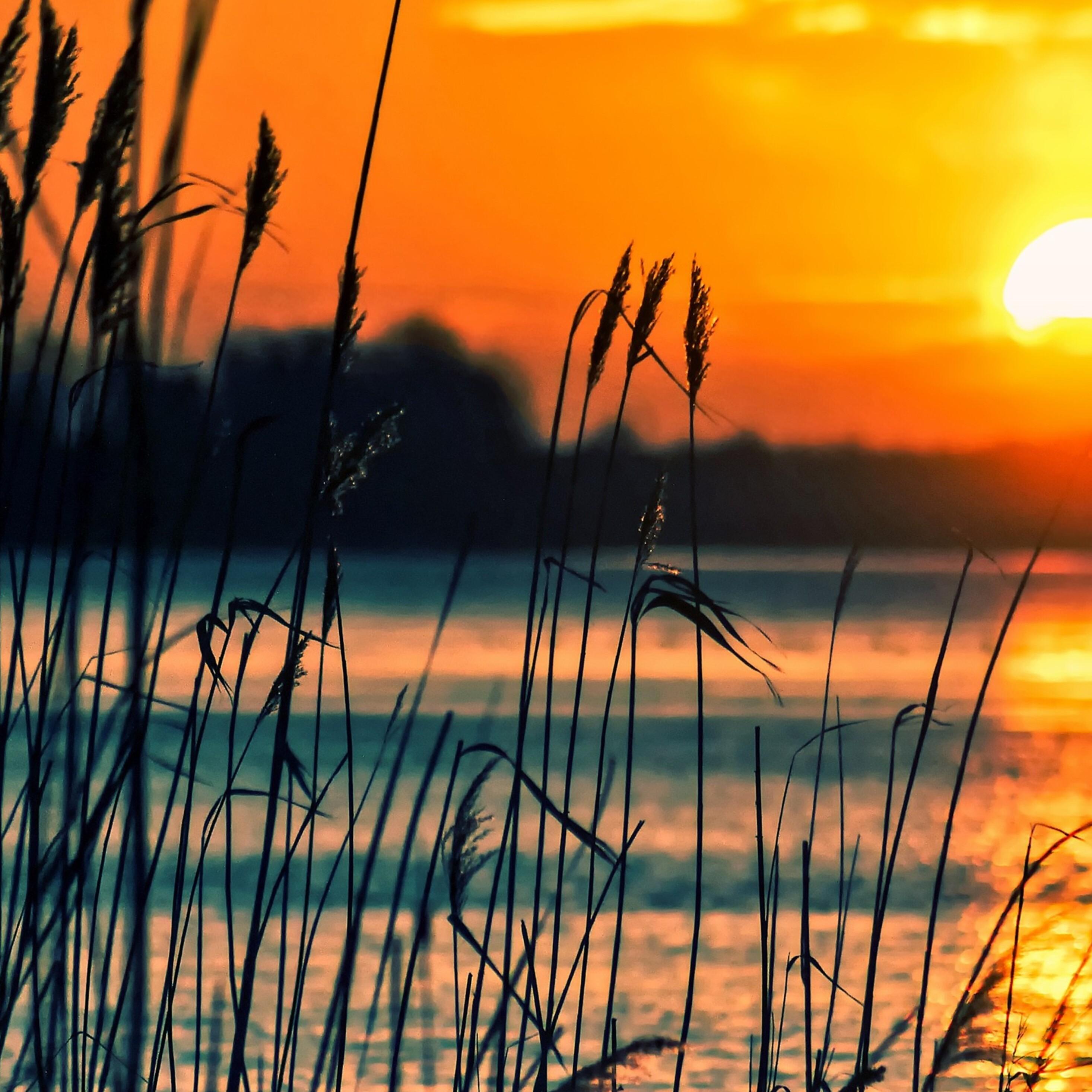 трава камыш озеро закат скачать
