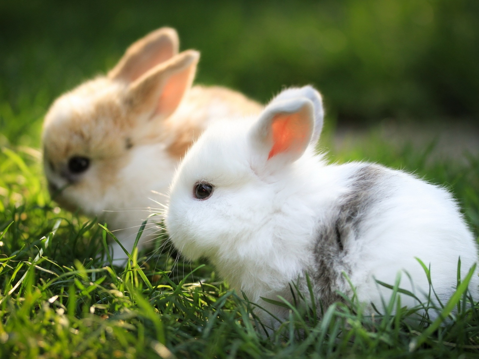 cute-bunnies.jpg