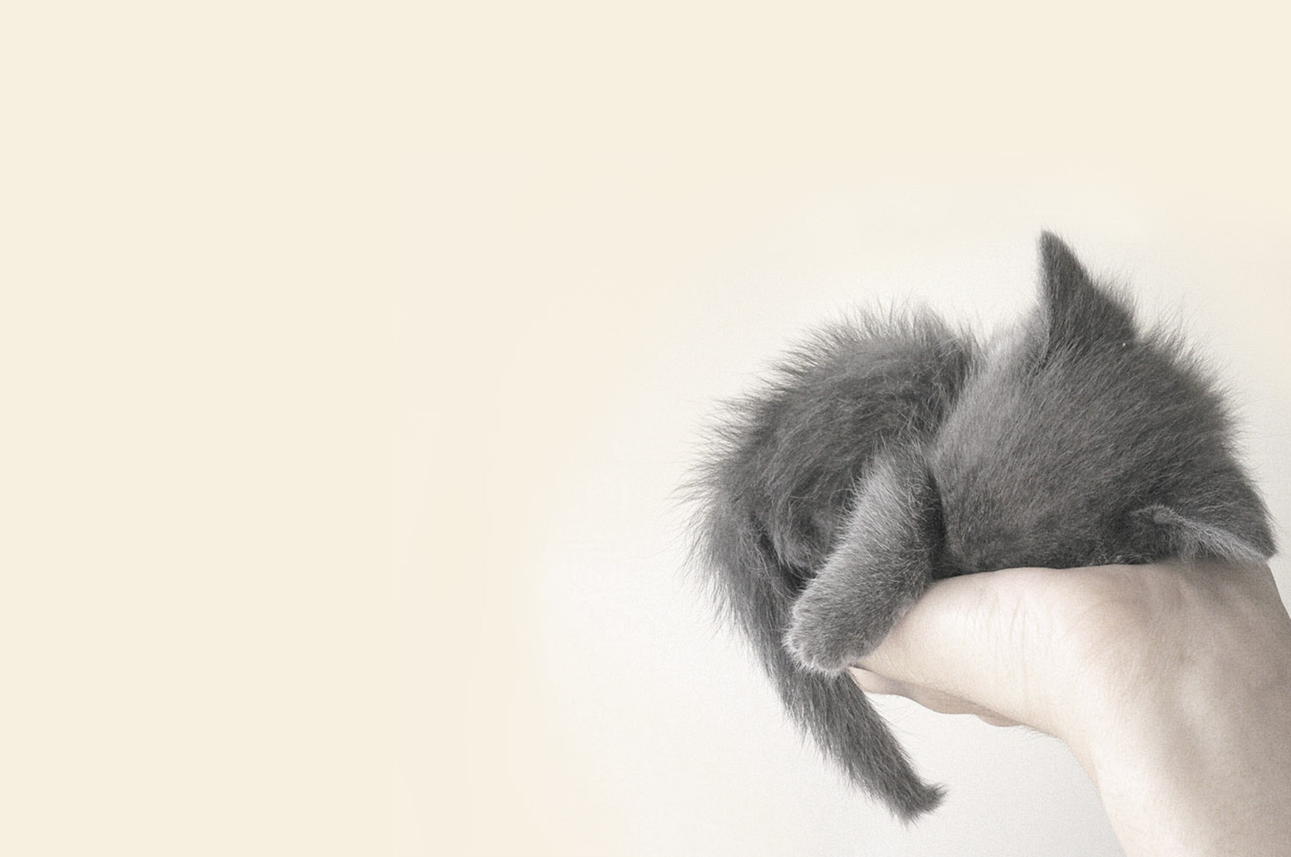 2560x1700 Cute Cat Chromebook Pixel Hd 4k Wallpapers Images