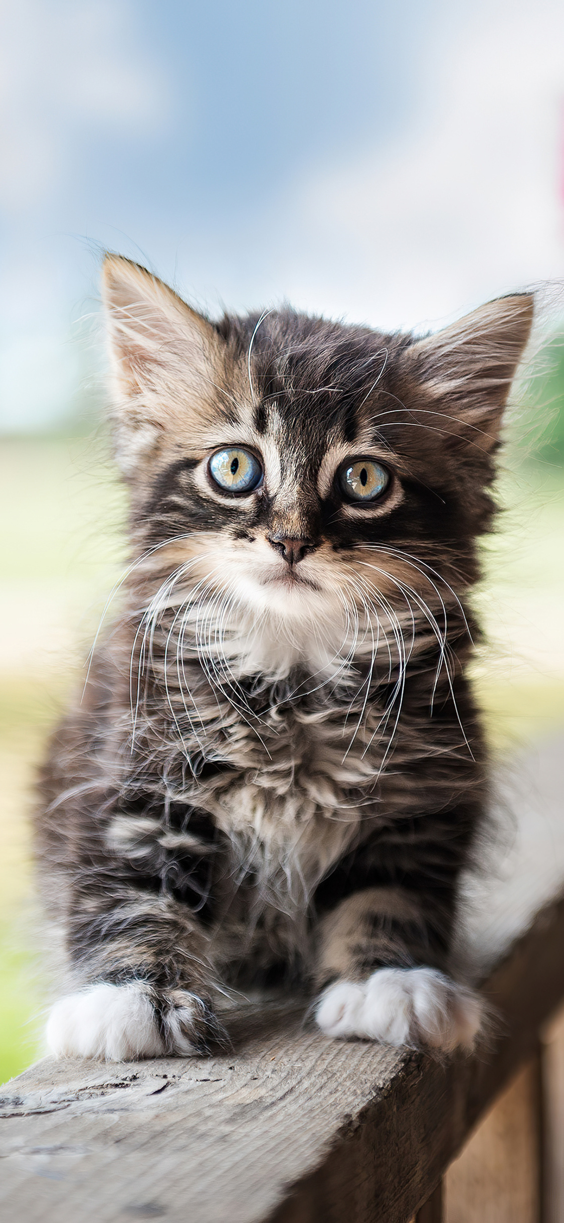 cute-cat-4k-wg.jpg