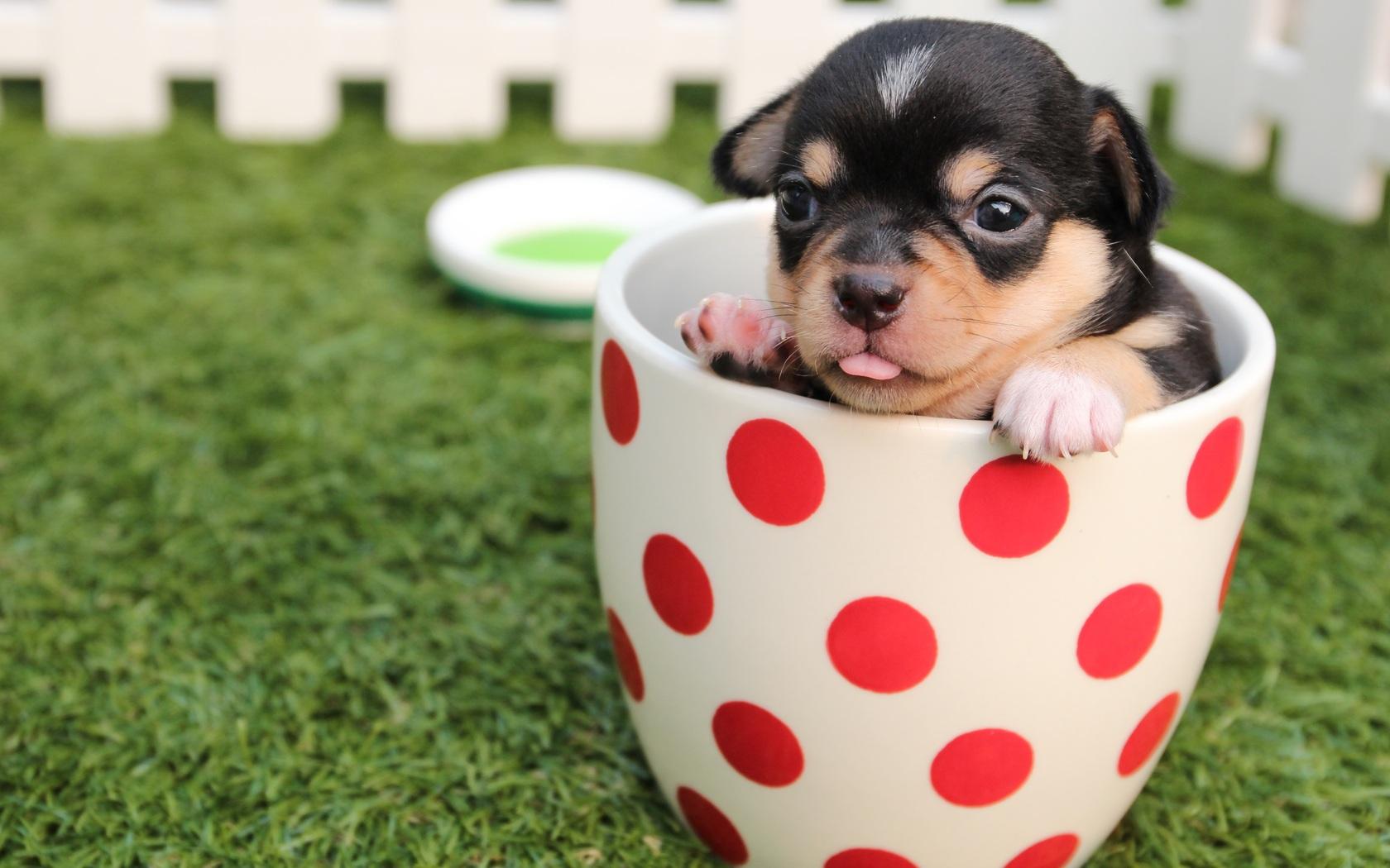 cute-dog-puppy-in-cup.jpg