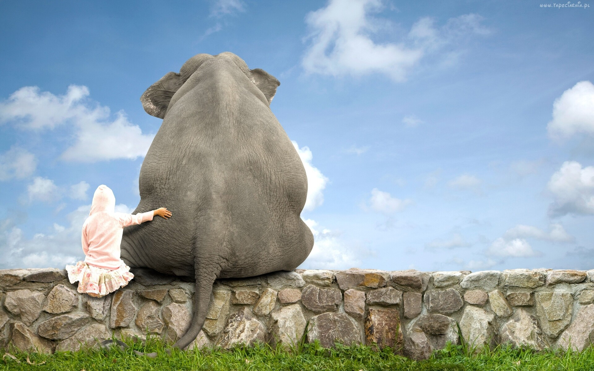 cute-elephant-friend.jpg