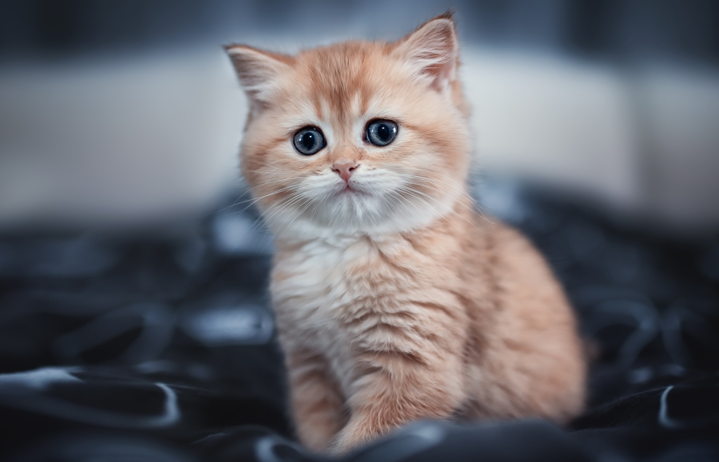 cute-kitten-4k-im.jpg