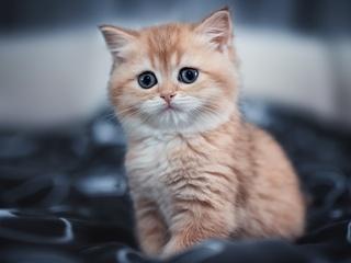 cute-kitten-4k-im.jpg