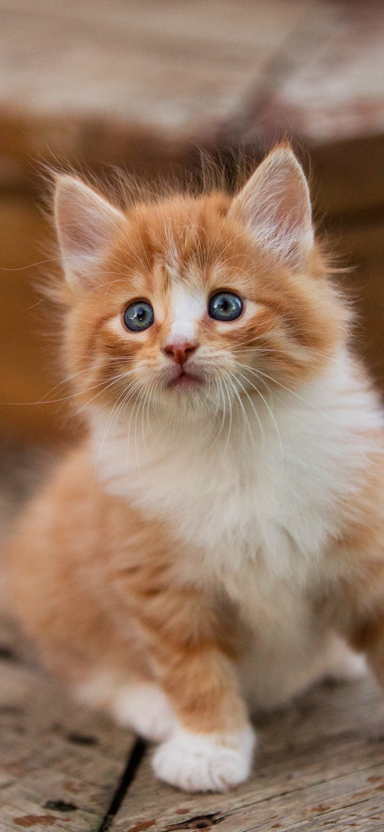 1242x2688 Cute Kitten Iphone Xs Max Hd 4k Wallpapers Images Backgrounds Photos And Pictures