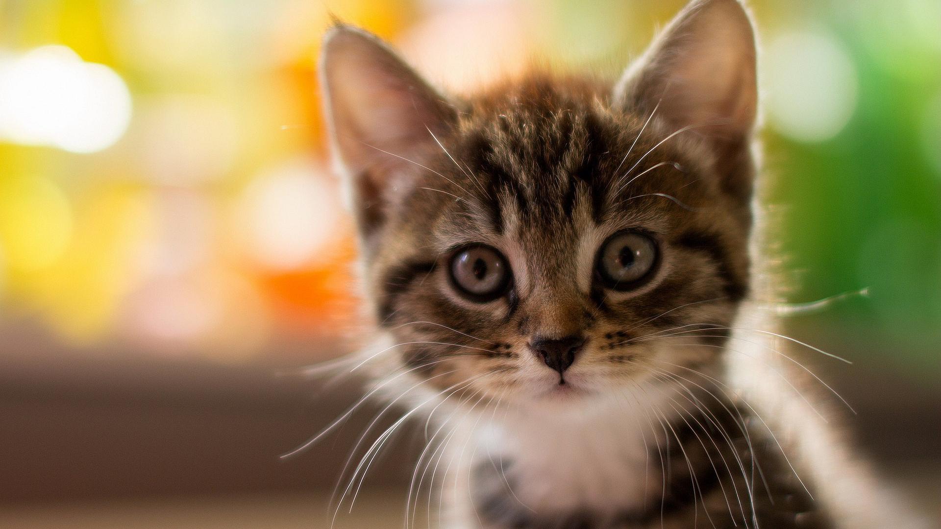 1920x1080 Cute Kitty Laptop Full HD 1080P HD 4k Wallpapers ...