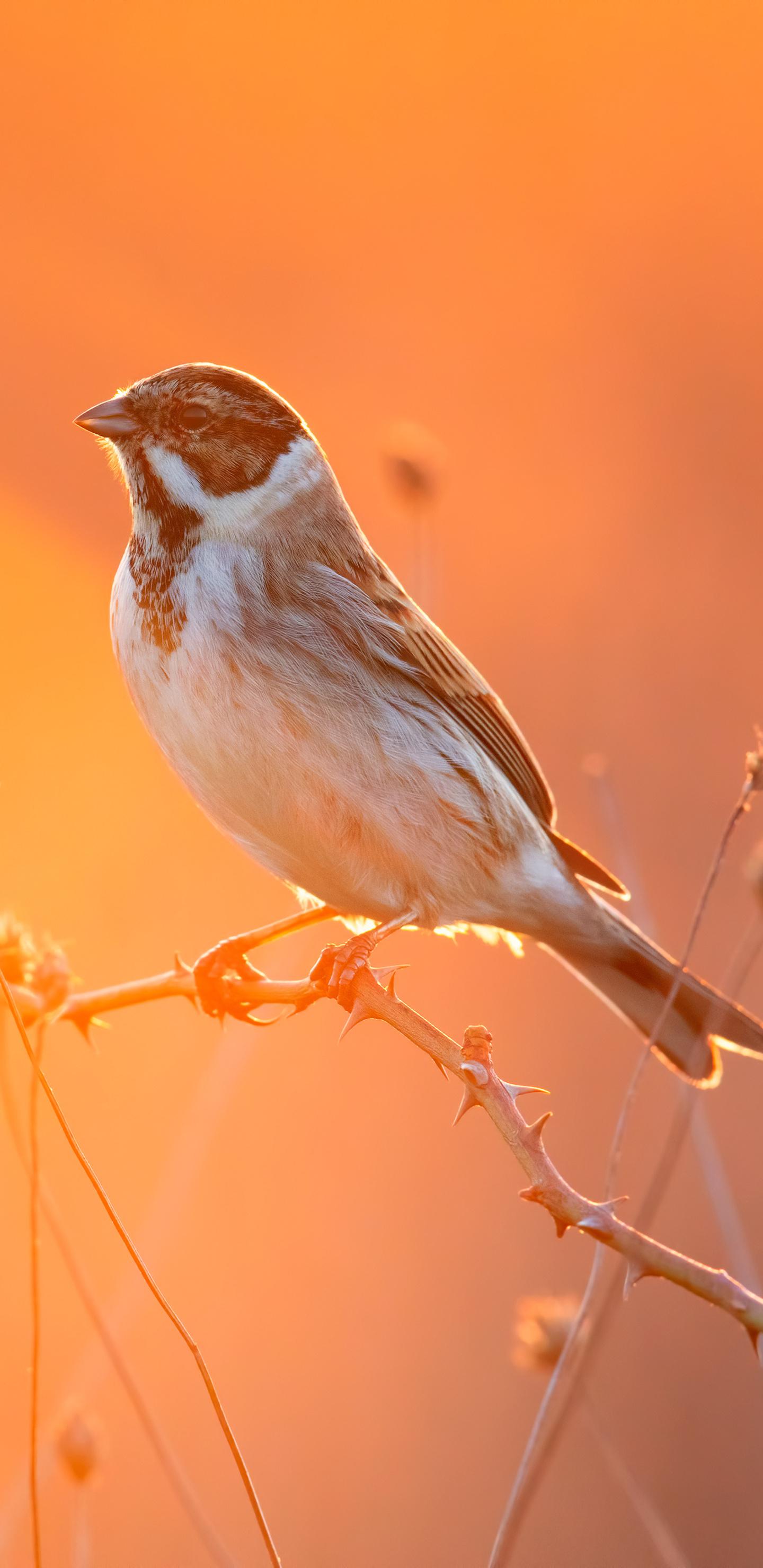 cute-little-bird-4k-3s.jpg