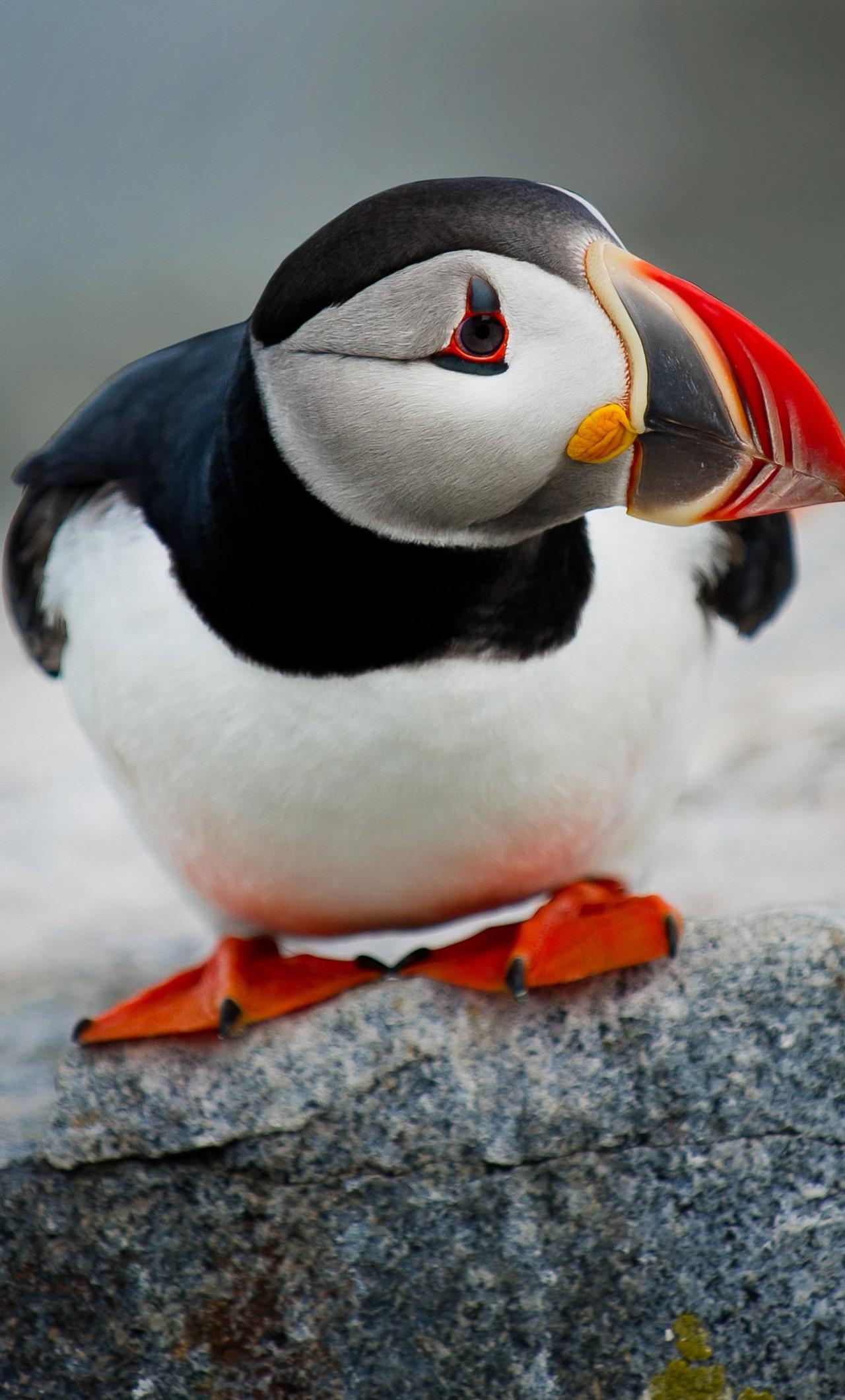cute-puffin-bird-wide.jpg
