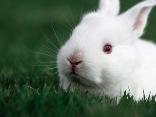 320x240 Cute Rabbit Apple Iphone Ipod Touch Galaxy Ace Hd 4k