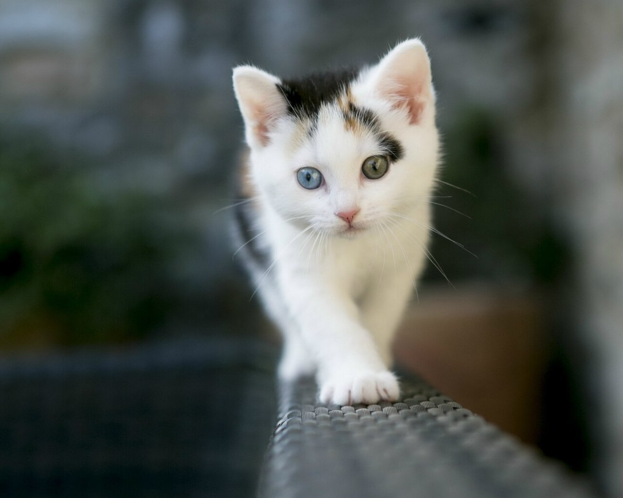 cute-white-cat.jpg