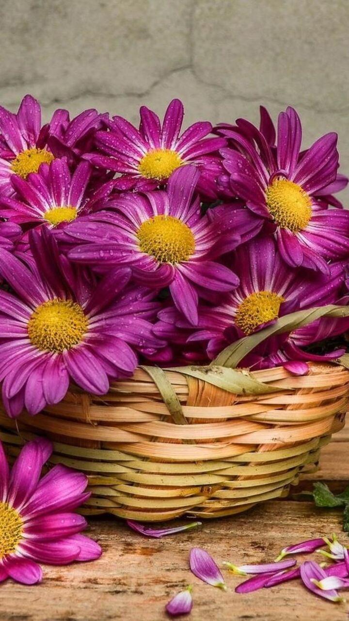 daisies-in-a-basket-img.jpg
