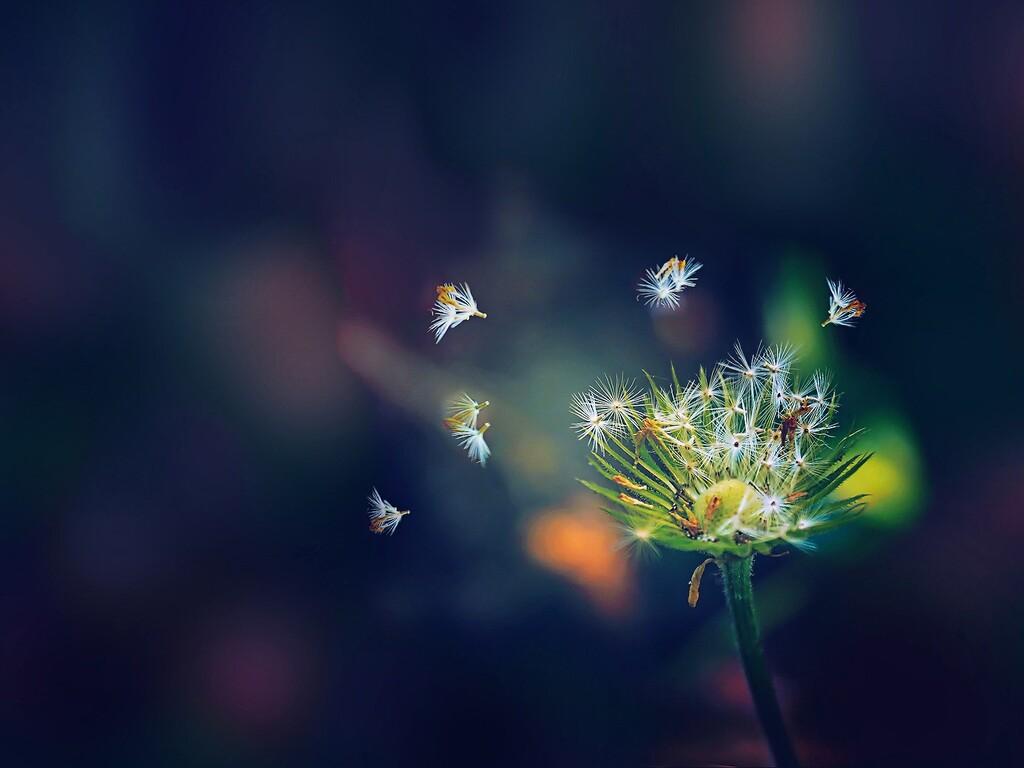 dandelion-flies-flowers.jpg
