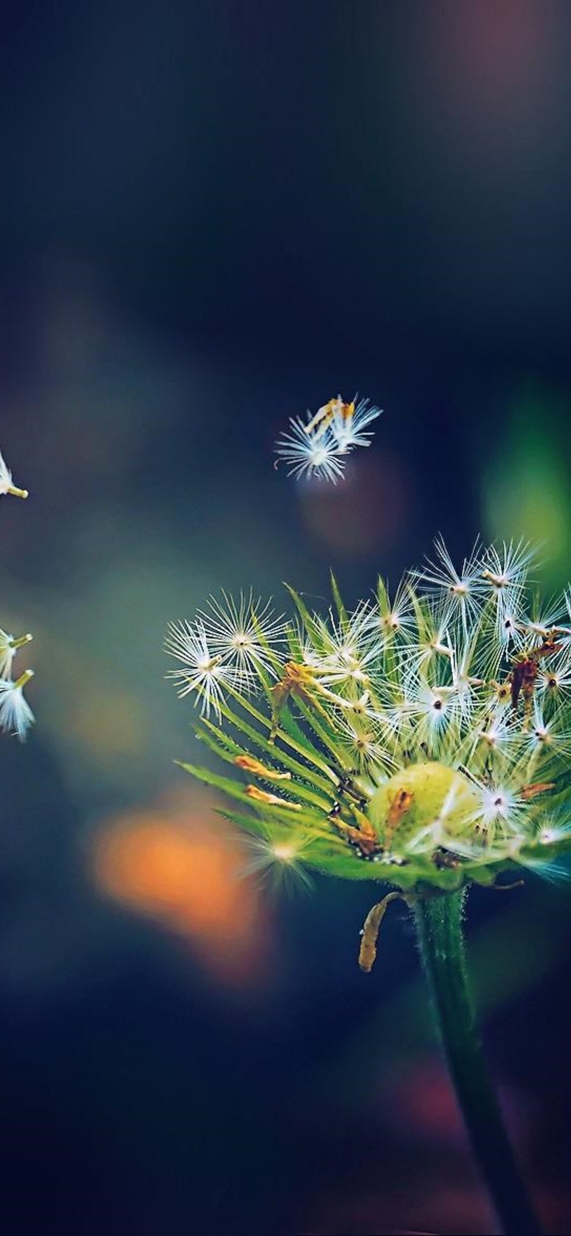 dandelion-flies-flowers.jpg