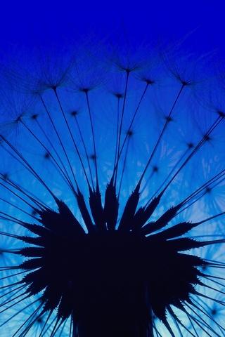 dandelion-macro-flower-j0.jpg