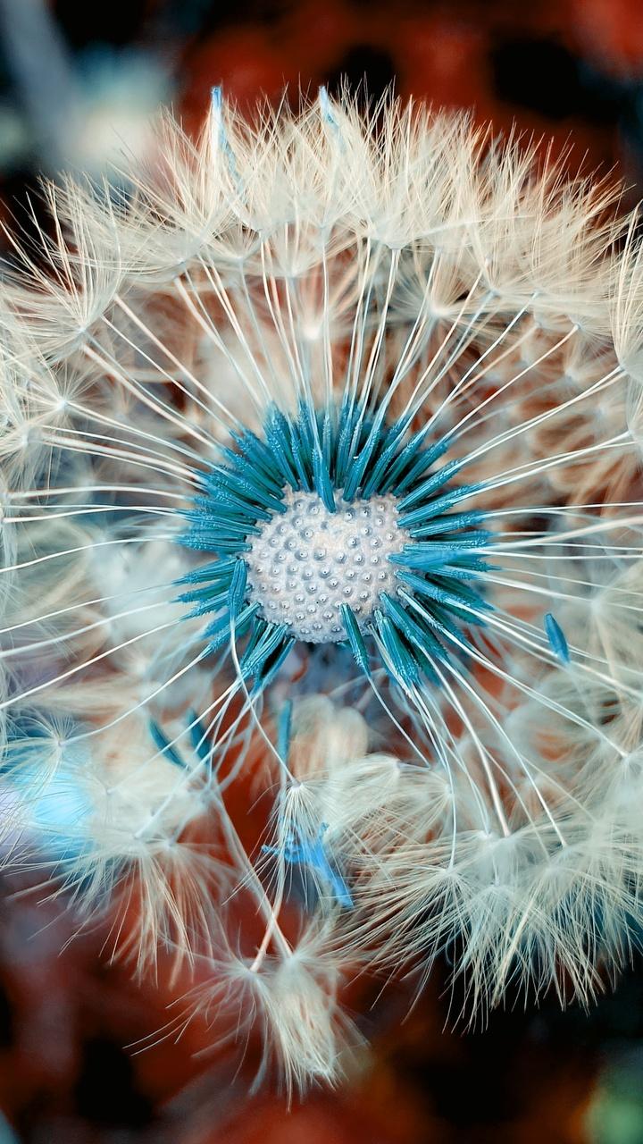dandelion-plant-close-up-macro-jw.jpg