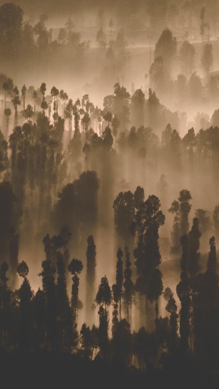 dark-forest-trees-nature-scenery-2c.jpg