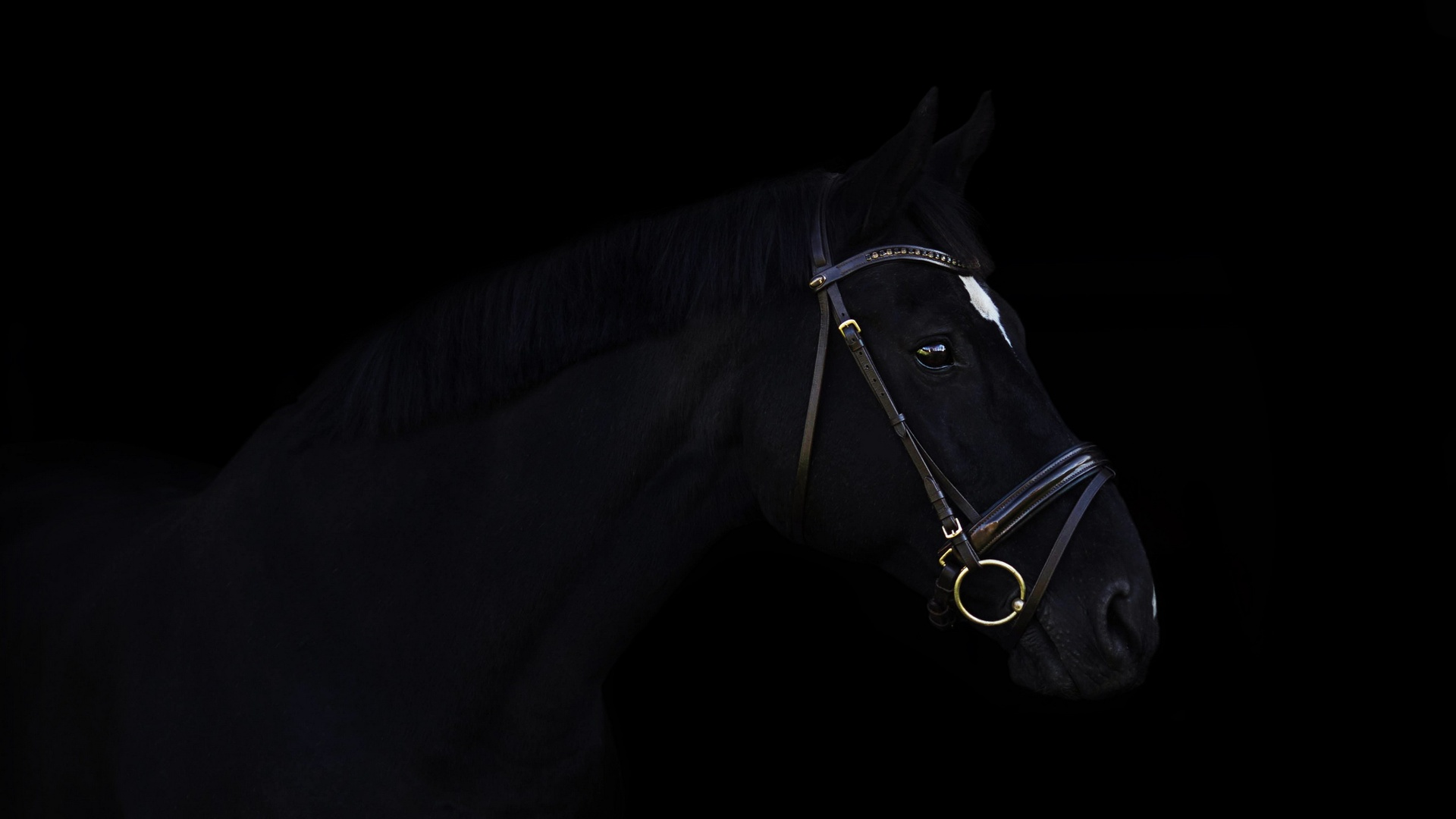 Top Five Black Horse Images Hd 1080p