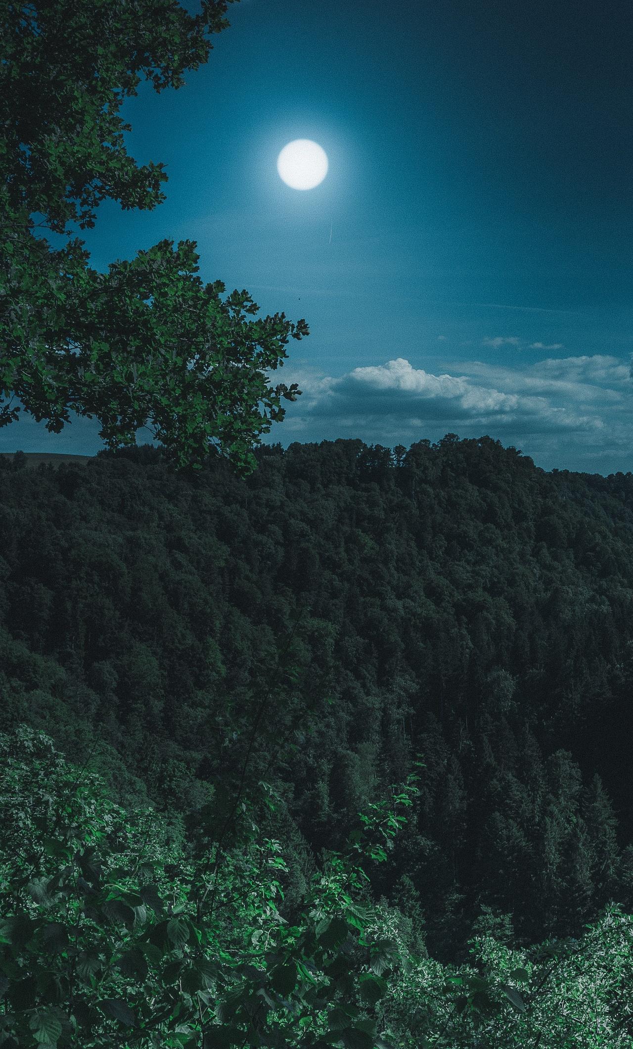 1280x2120 Dark Night Forest View 5k Iphone 6 Hd 4k