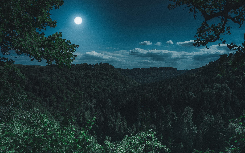 2880x1800 Dark Night Forest View 5k Macbook Pro Retina Hd 4k