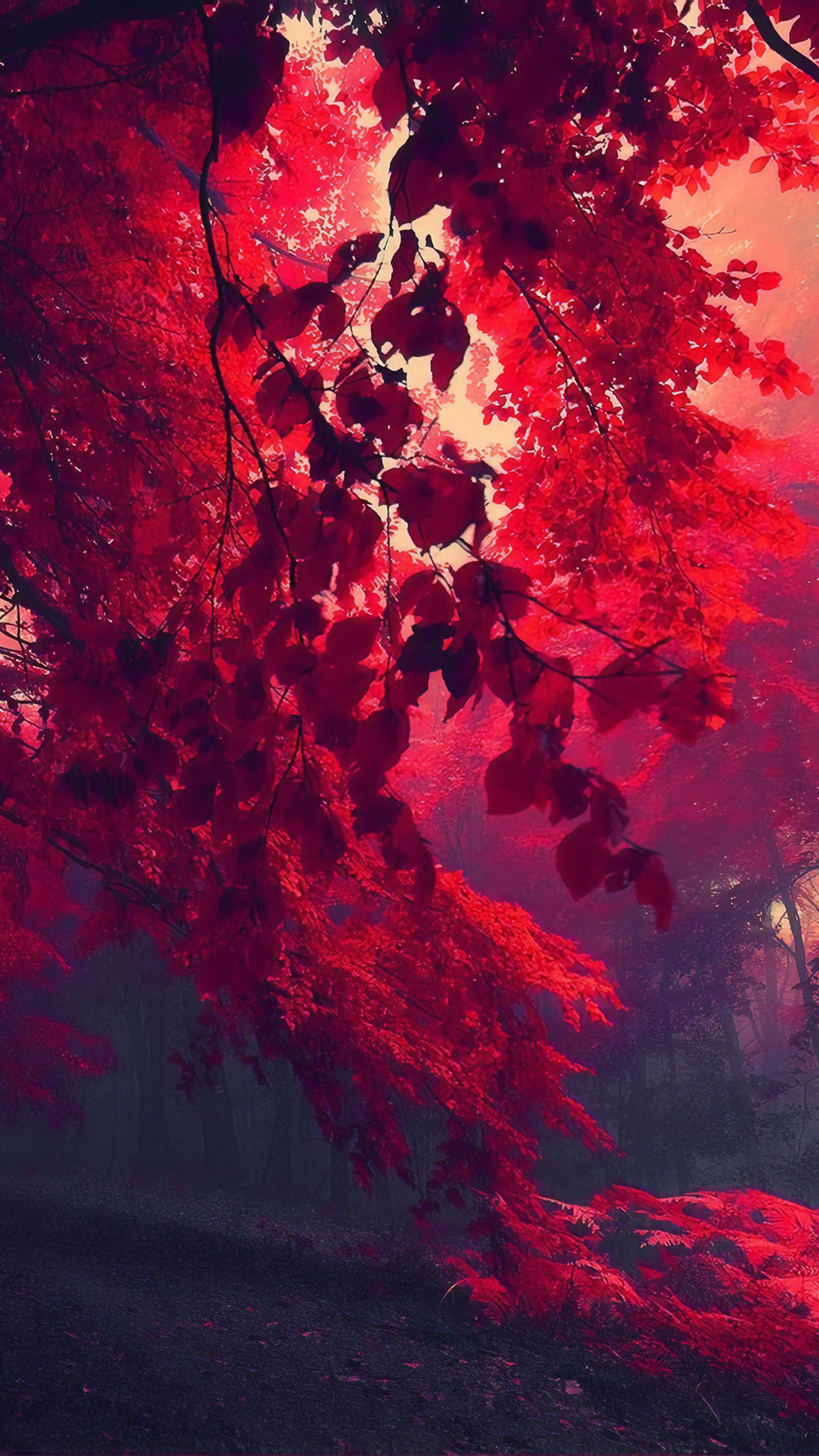 dark-red-autumn-forest-za.jpg