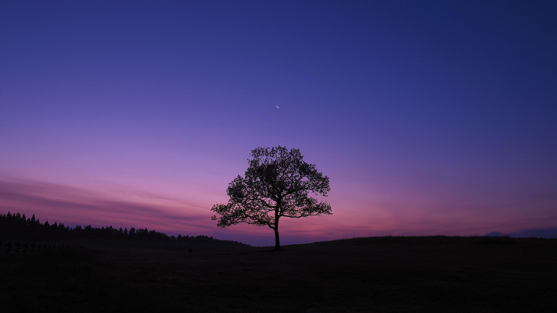 1920x1080 dark sky tree purple sky nature laptop full hd 1080p hd 4k