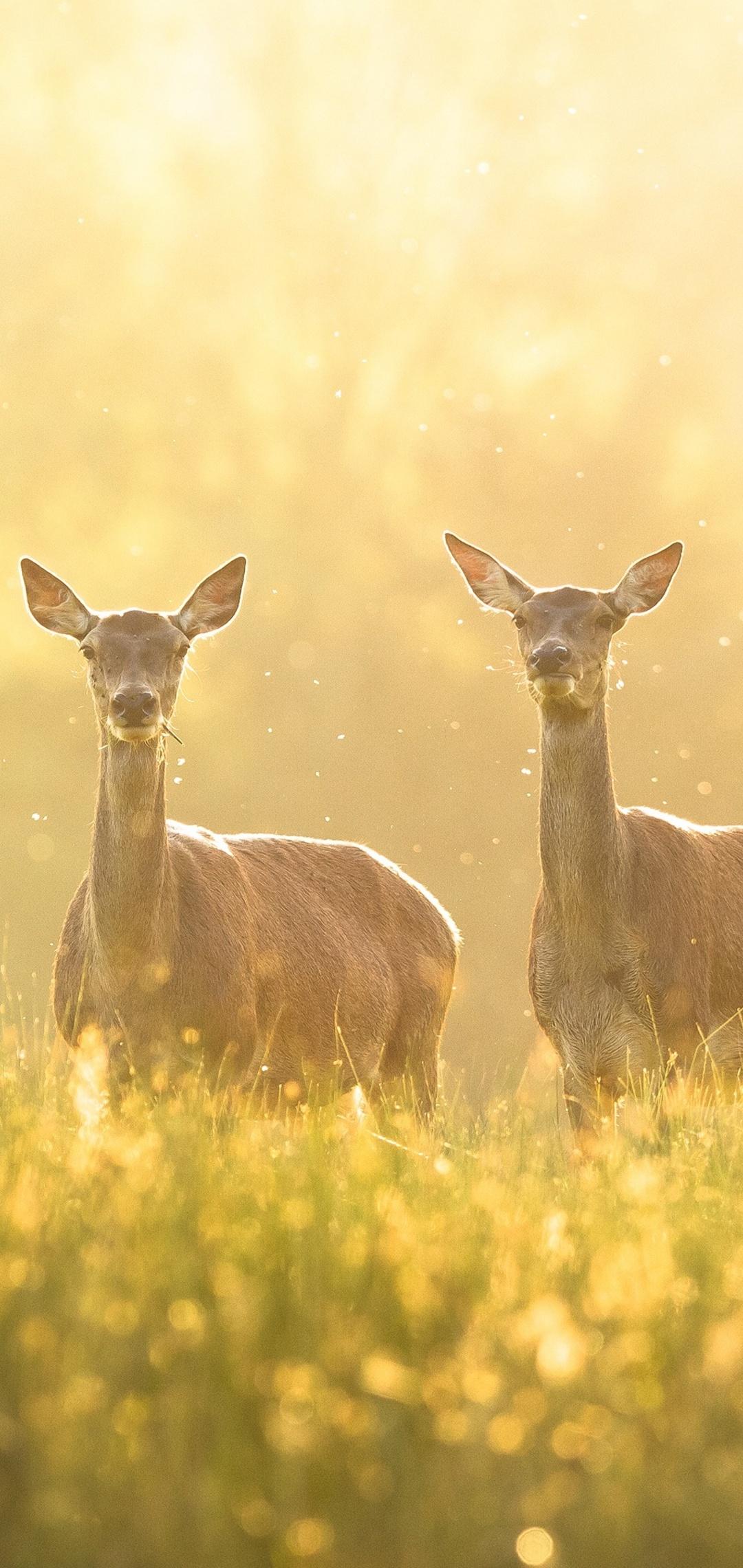 deer-grass-4k-3i.jpg