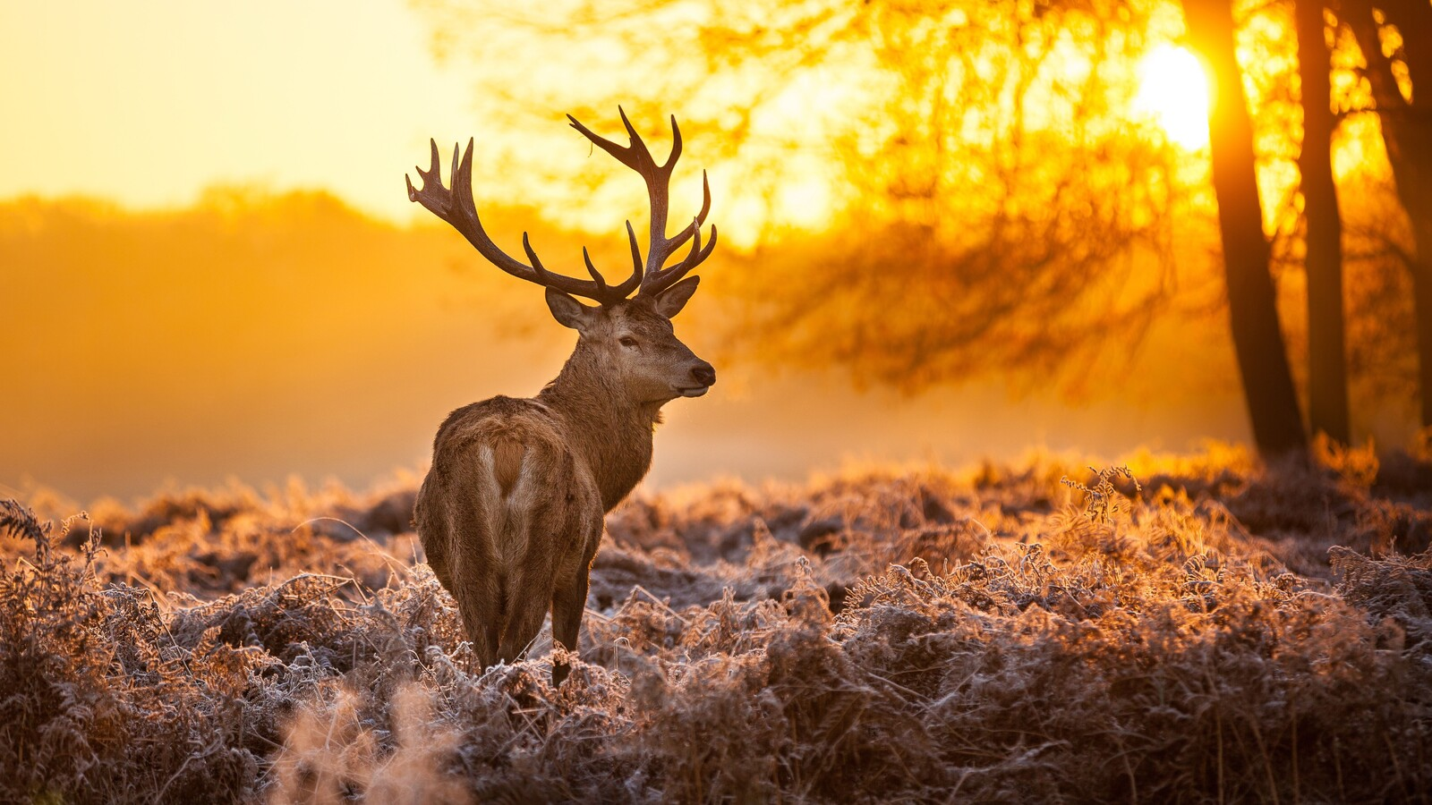 1600x900 deer in forest 1600x900 resolution hd 4k wallpapers, images