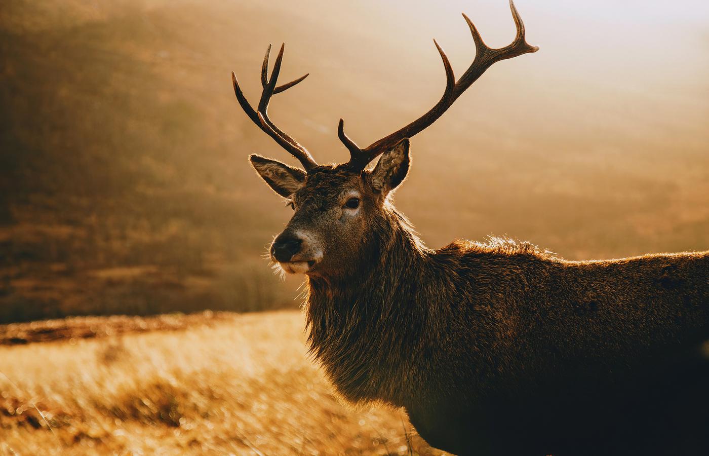 deer-morning-landscape-4k-87.jpg