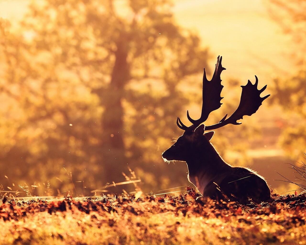 1280x1024 deer 1280x1024 resolution hd 4k wallpapers images