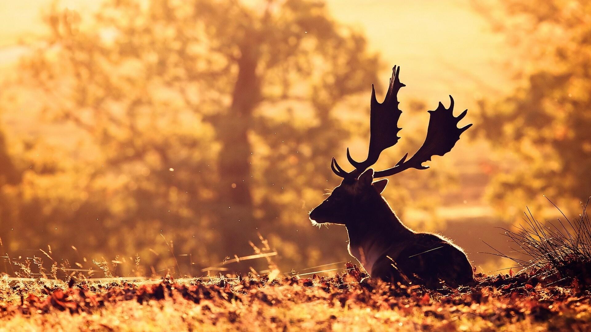 Deer Wallpapers Apps on Google