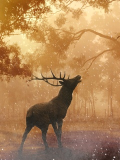 Deer Wild Nature Forest 4k Wg