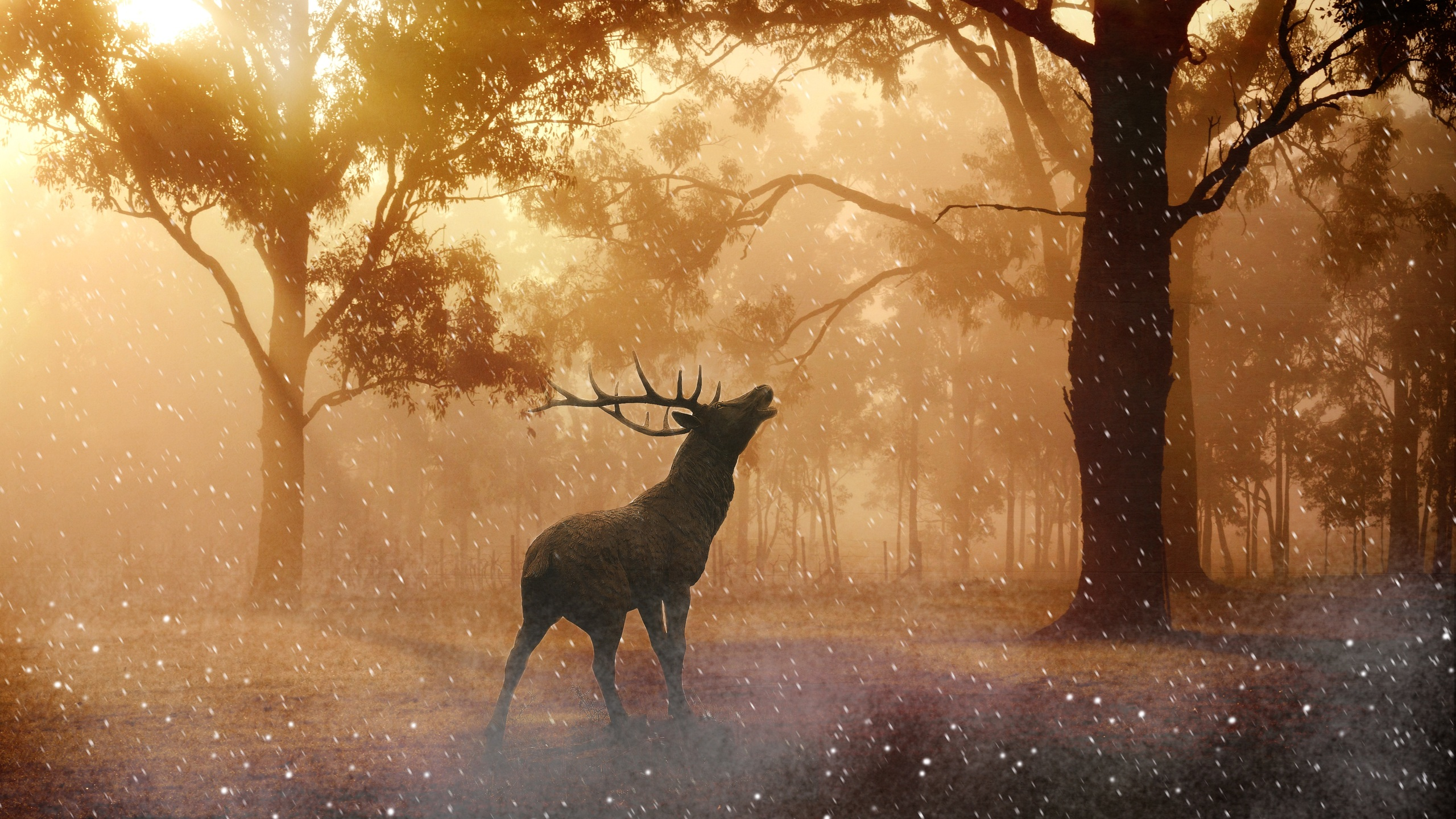 2560x1440 Deer Wild Nature Forest 4k 1440p Resolution Hd 4k Wallpapers Images Backgrounds Photos And Pictures