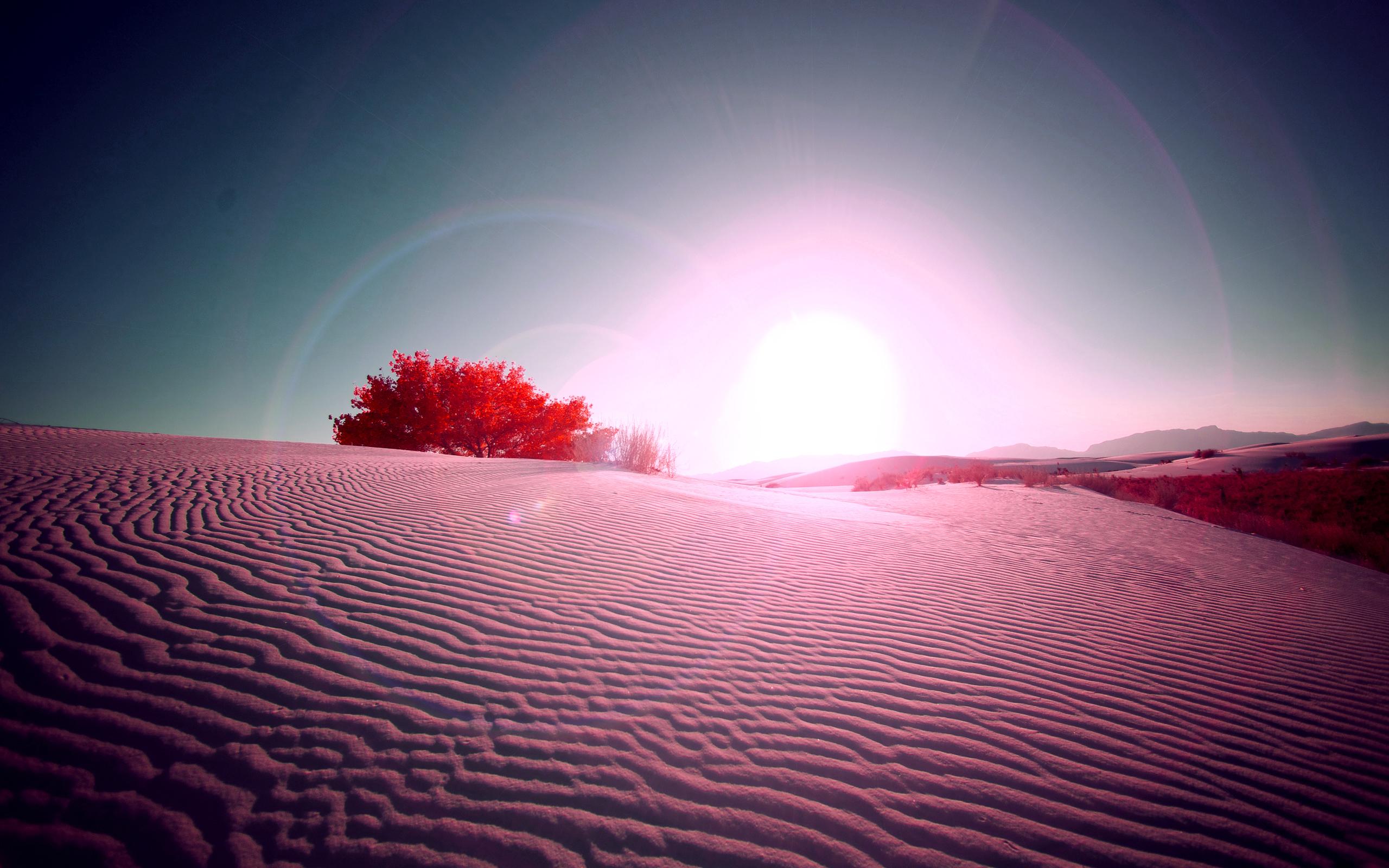 природа пустыня солнце  № 948733  скачать