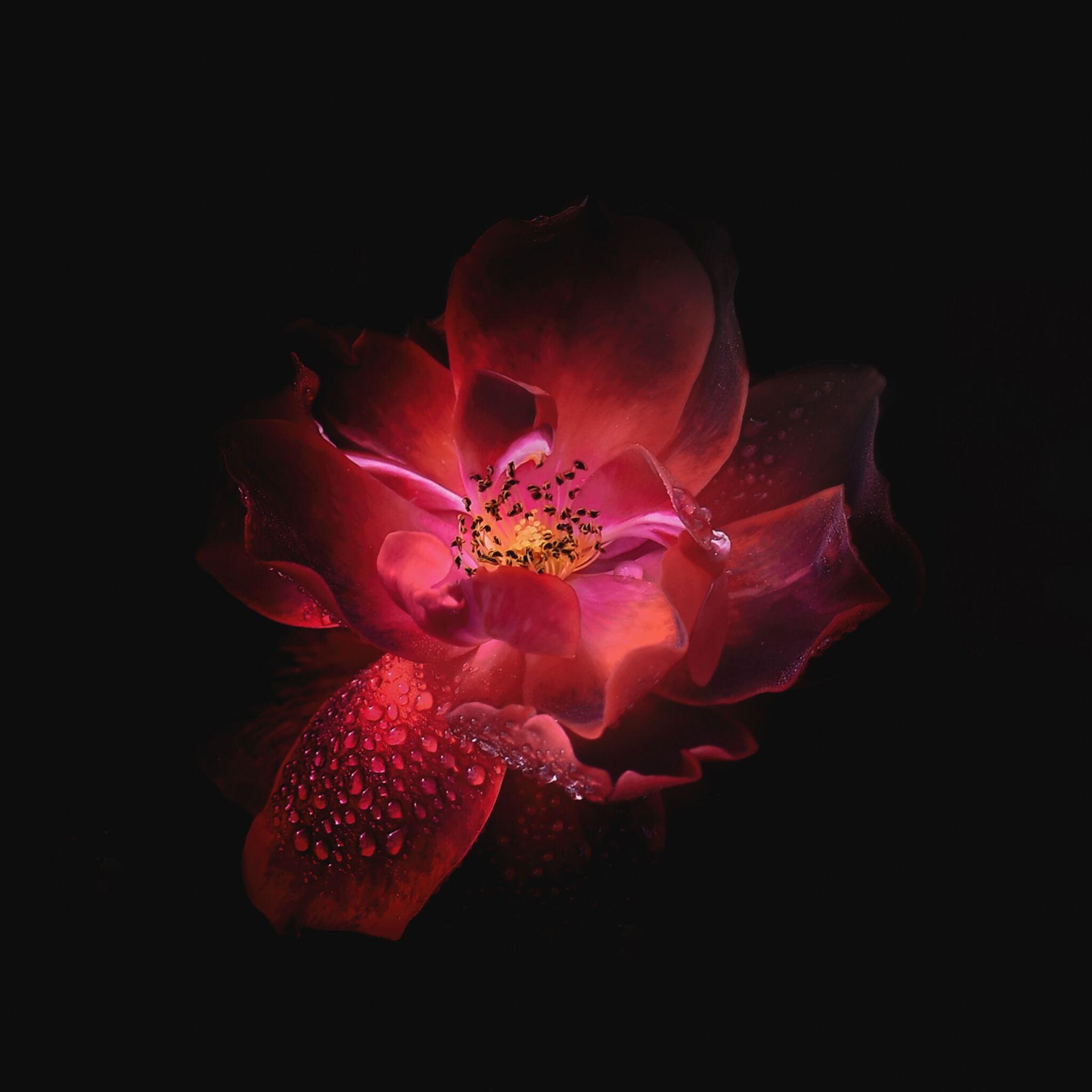 dewdrop-on-floral-petal-oled-5k-tr.jpg